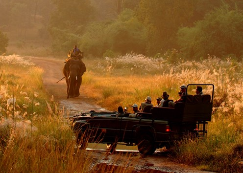 Out of India: 5 Safari Camps to Visit Now