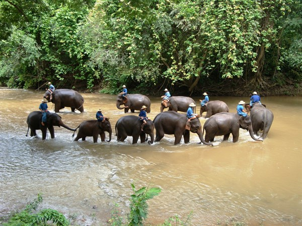 THAILAND - Chang Rai elephant camp