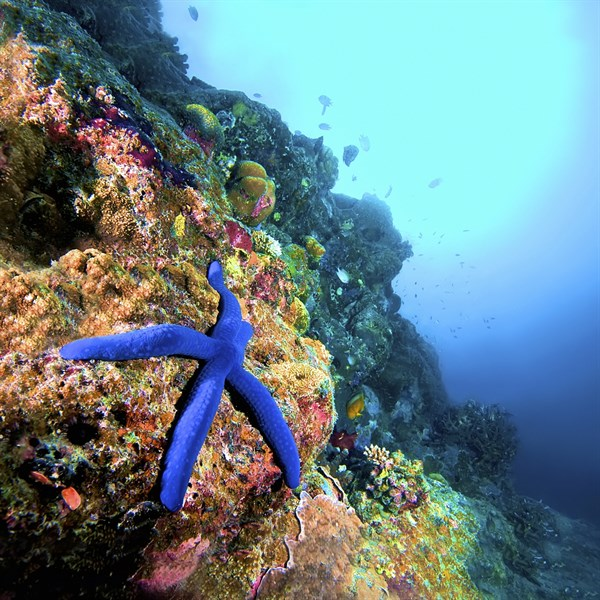 MALDIVES - diving, snorkelling starfish