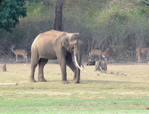 Orange County Kabini 2