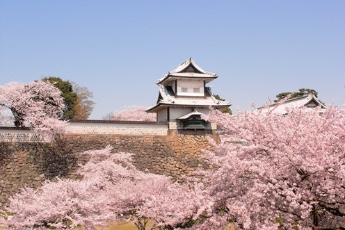 When and where can you see the Cherry Blossom in Japan?