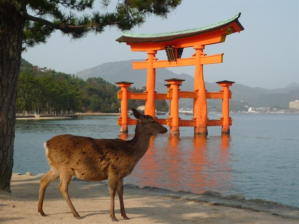 Miyajima Floating Tori Deer