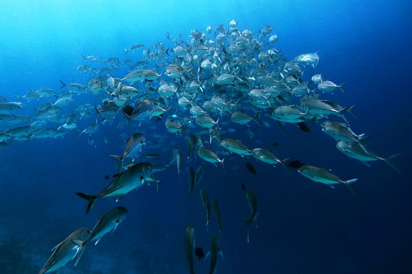 MALDIVES-Soneva -Fushi -school -of -fish