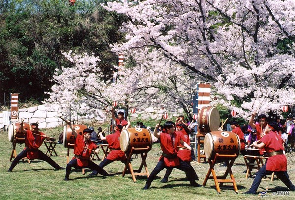 M _106050 Drummers And Cherry Blossom 2