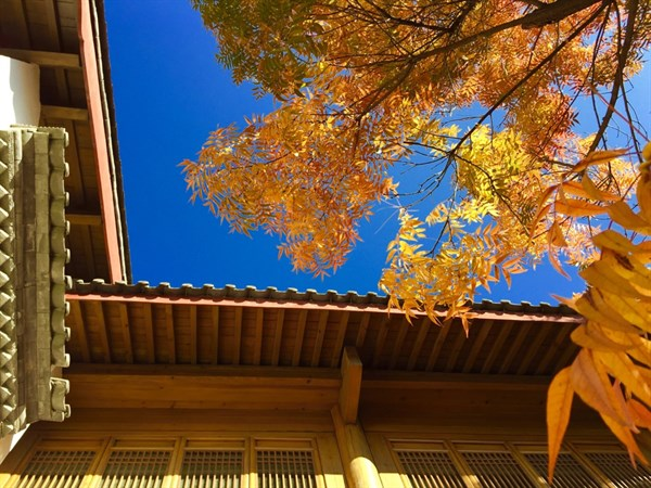 Autumn In Lijiang