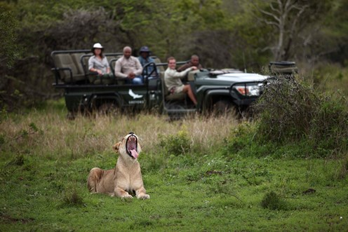 Great Safaris of Southern Africa