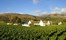 Steenberg Farm And Vineyards Winelands South Africa 3