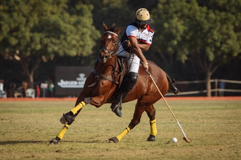 Polo and Peacocks: British Polo Day in Jodhpur