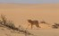 Hoanib Skeleton Coast Skeleton Coast Namibia 33Jpg