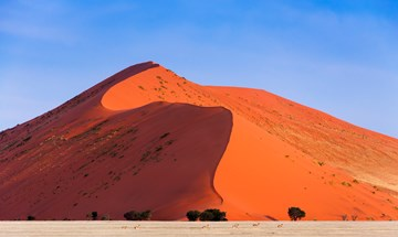 Namibia Springbok Passing In Front Of A Red Dune In Sossusvlei