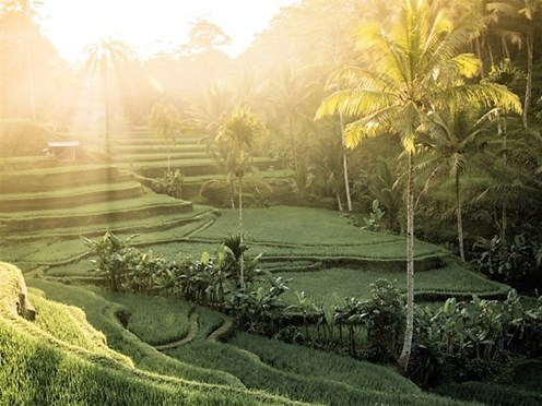 Best of Bali style