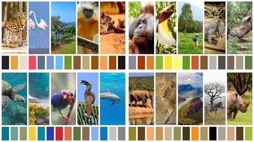 Wildlife Colourscapes