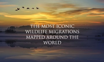 Wildlife Migrations - header image - Copy1.jpg