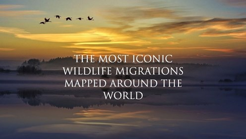 The most iconic Wildlife Migrations mapped around the World